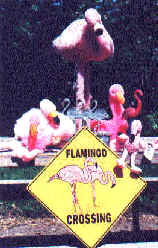 The Flock - of flamingos